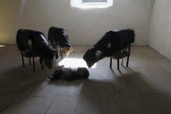 Black sheep | © Monika Vos