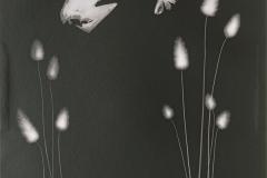 nature morte | © Jutta Tonigs